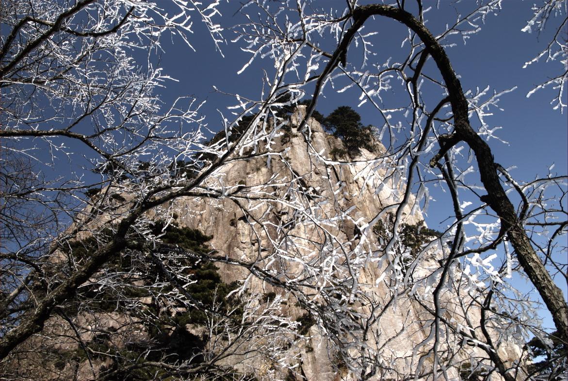 透过白雪压顶的松树林